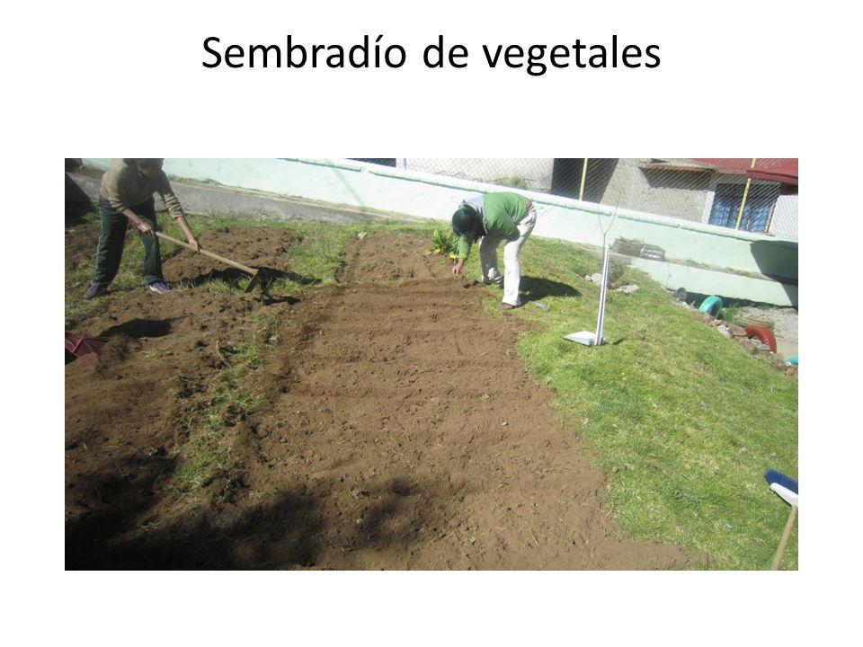 Sembradío de vegetales