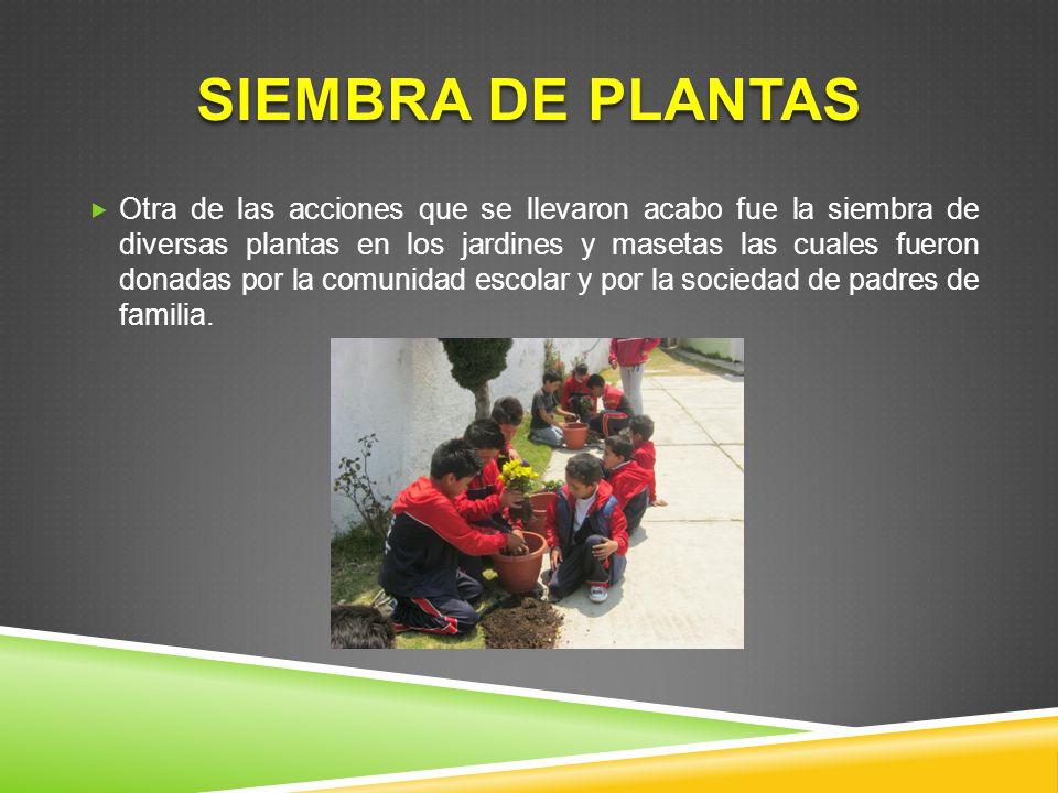 Siembra de plantas