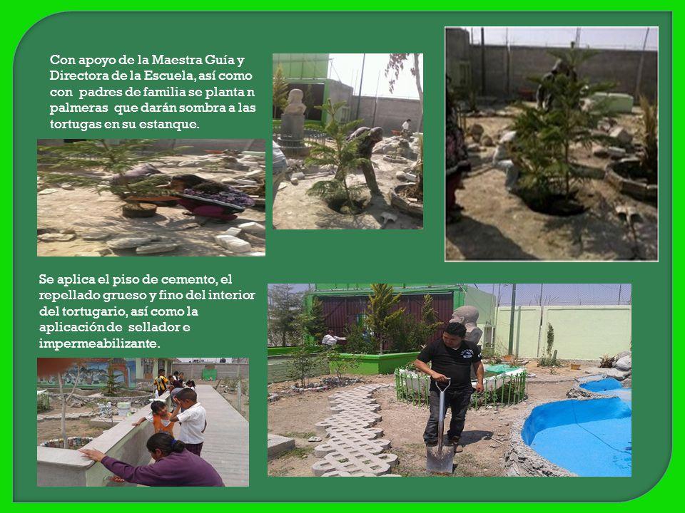 Con apoyo de la Maestra Guía y Directora de la Escuela, así como con padres de familia se planta n palmeras que darán sombra a las tortugas en su estanque.