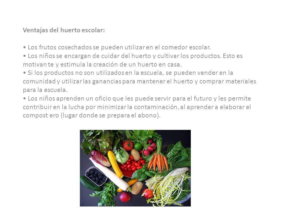 Ventajas del huerto escolar: • Los frutos cosechados se pueden utilizar en el comedor escolar.