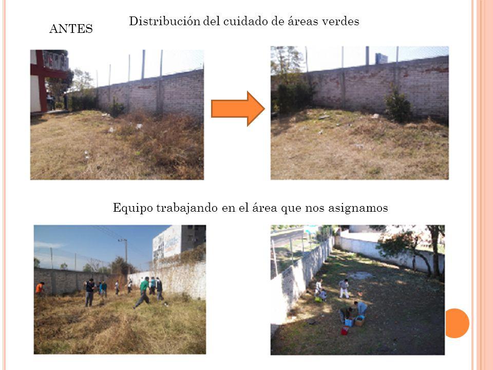 Distribución del cuidado de áreas verdes ANTES