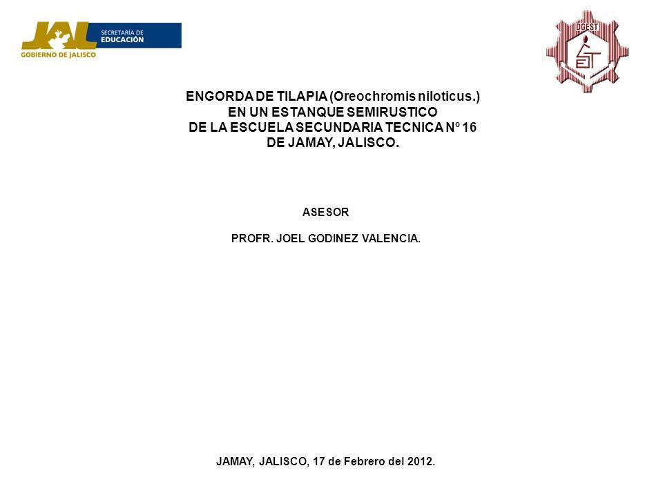 ENGORDA DE TILAPIA (Oreochromis niloticus.) EN UN ESTANQUE SEMIRUSTICO