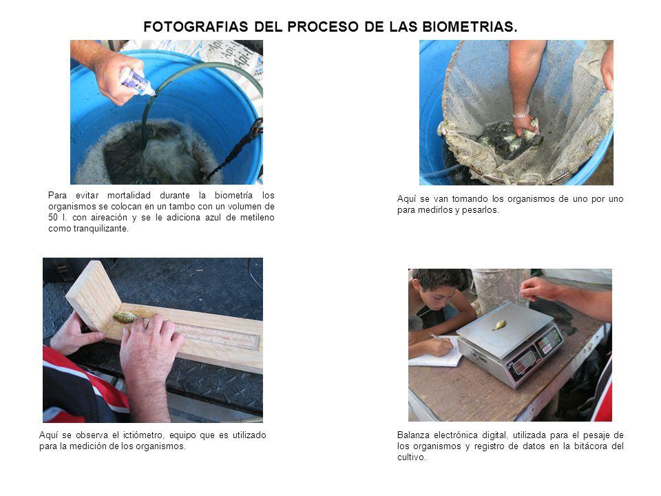 FOTOGRAFIAS DEL PROCESO DE LAS BIOMETRIAS.