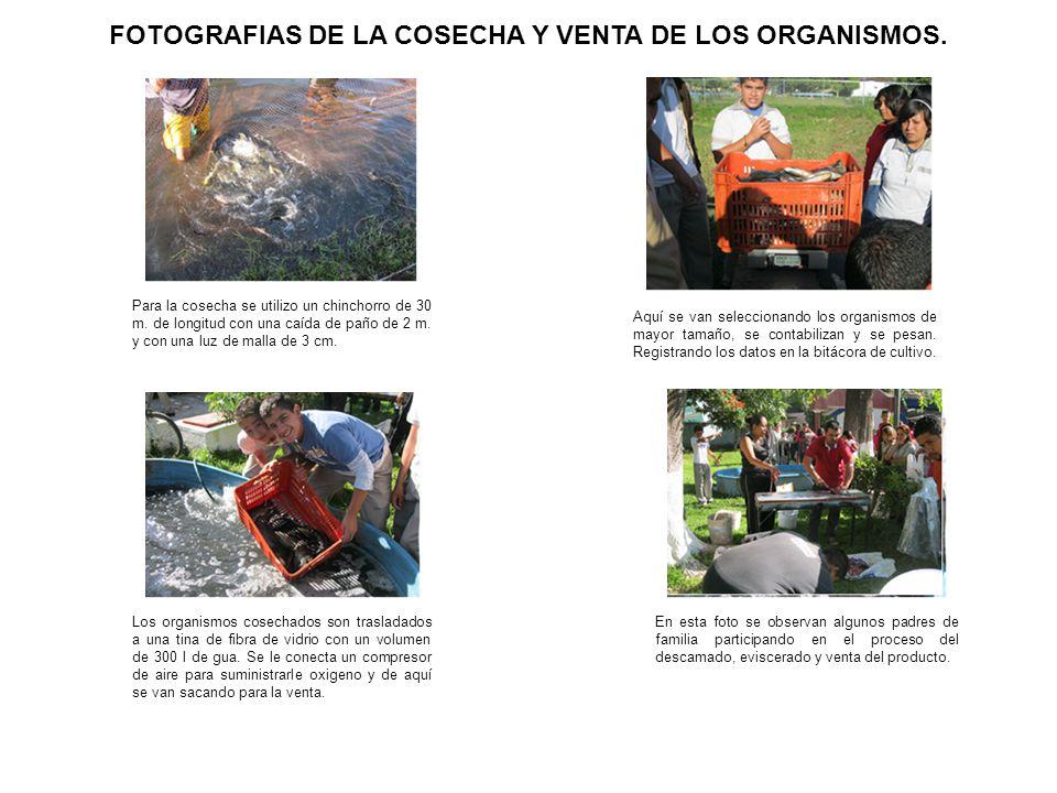 FOTOGRAFIAS DE LA COSECHA Y VENTA DE LOS ORGANISMOS.