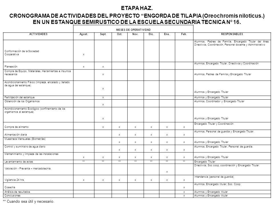 ETAPA HAZ. CRONOGRAMA DE ACTIVIDADES DEL PROYECTO ENGORDA DE TILAPIA (Oreochromis niloticus.) EN UN ESTANQUE SEMIRUSTICO DE LA ESCUELA SECUNDARIA TECNICA Nº 16.