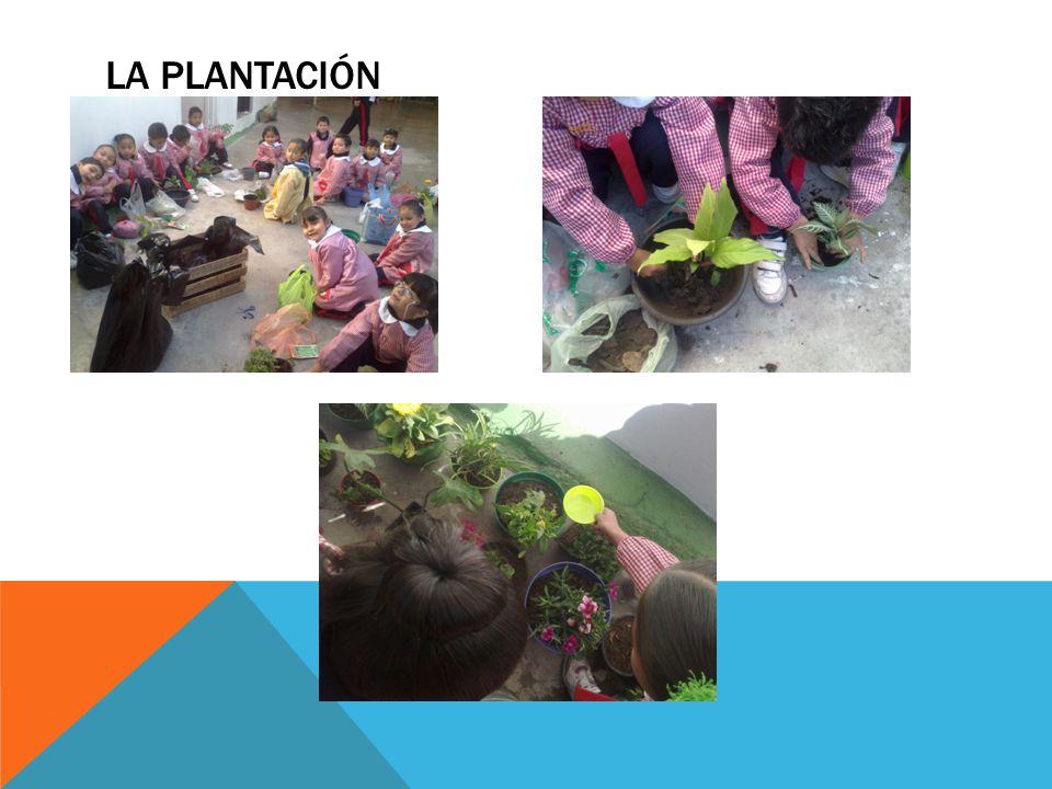 La plantación