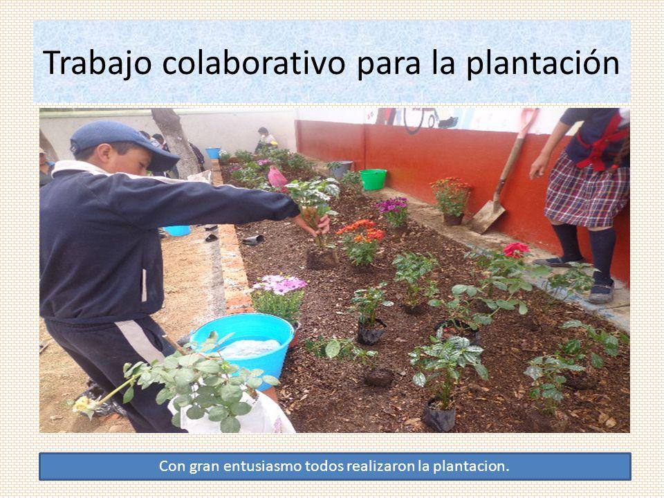 Trabajo colaborativo para la plantación