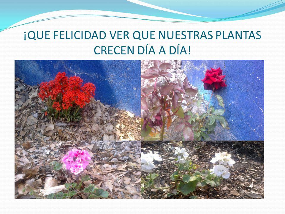 ¡QUE FELICIDAD VER QUE NUESTRAS PLANTAS CRECEN DÍA A DÍA!