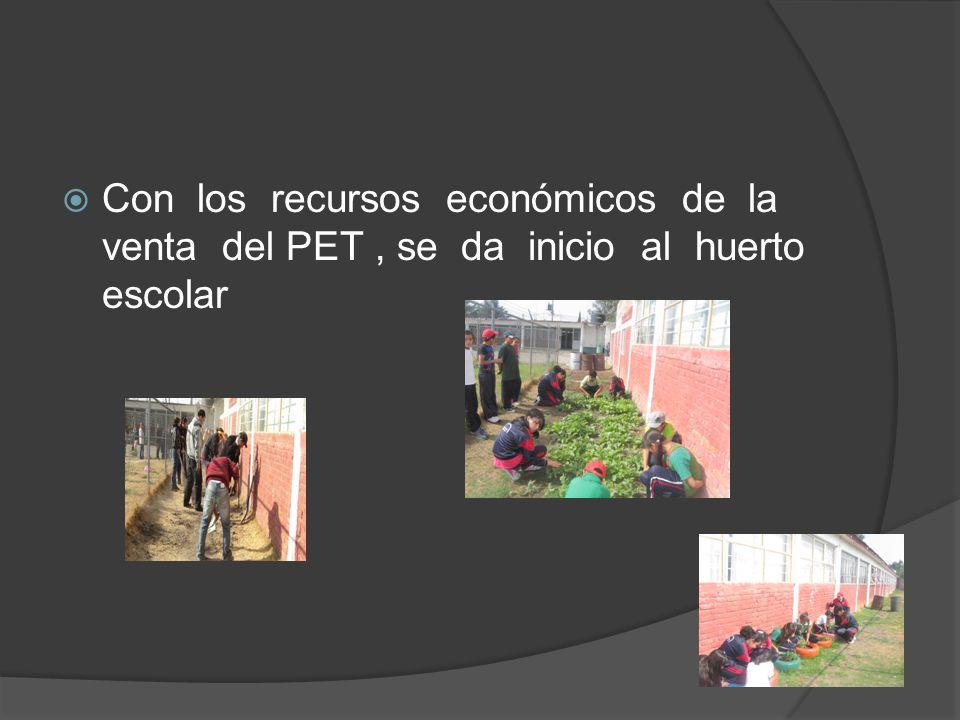 Con los recursos económicos de la venta del PET , se da inicio al huerto escolar