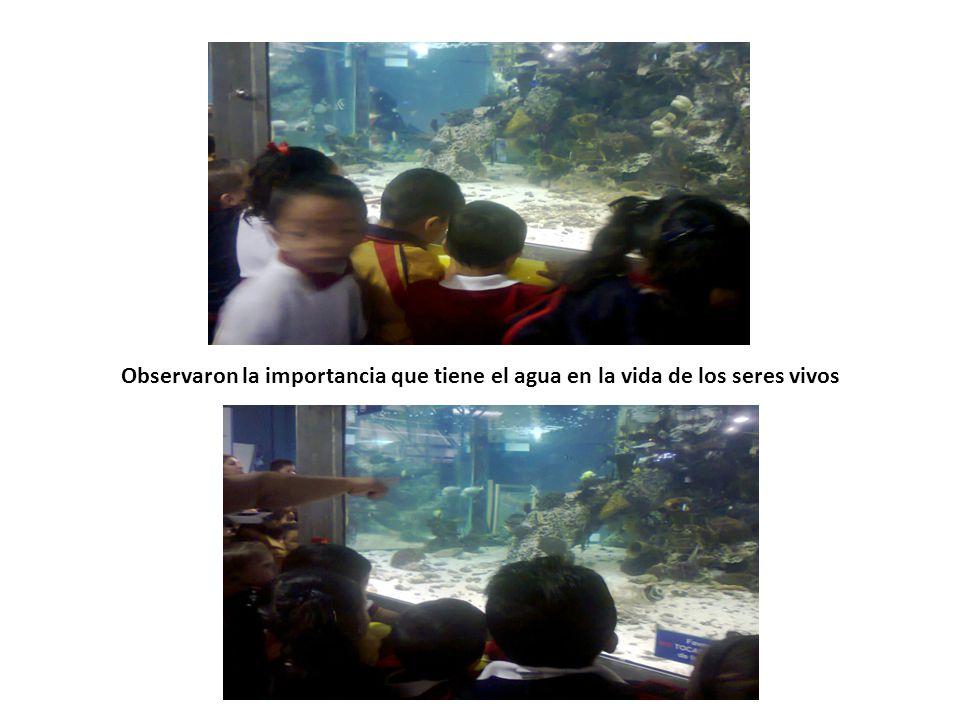 Observaron la importancia que tiene el agua en la vida de los seres vivos