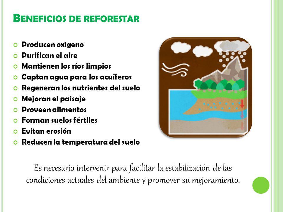 Beneficios de reforestar