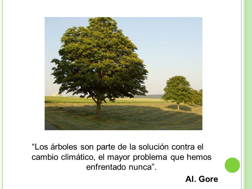Los árboles son parte de la solución contra el cambio climático, el mayor problema que hemos enfrentado nunca .