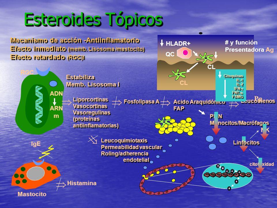 Esteroides Tópicos  Mecanismo de acción -Antiinflamatorio