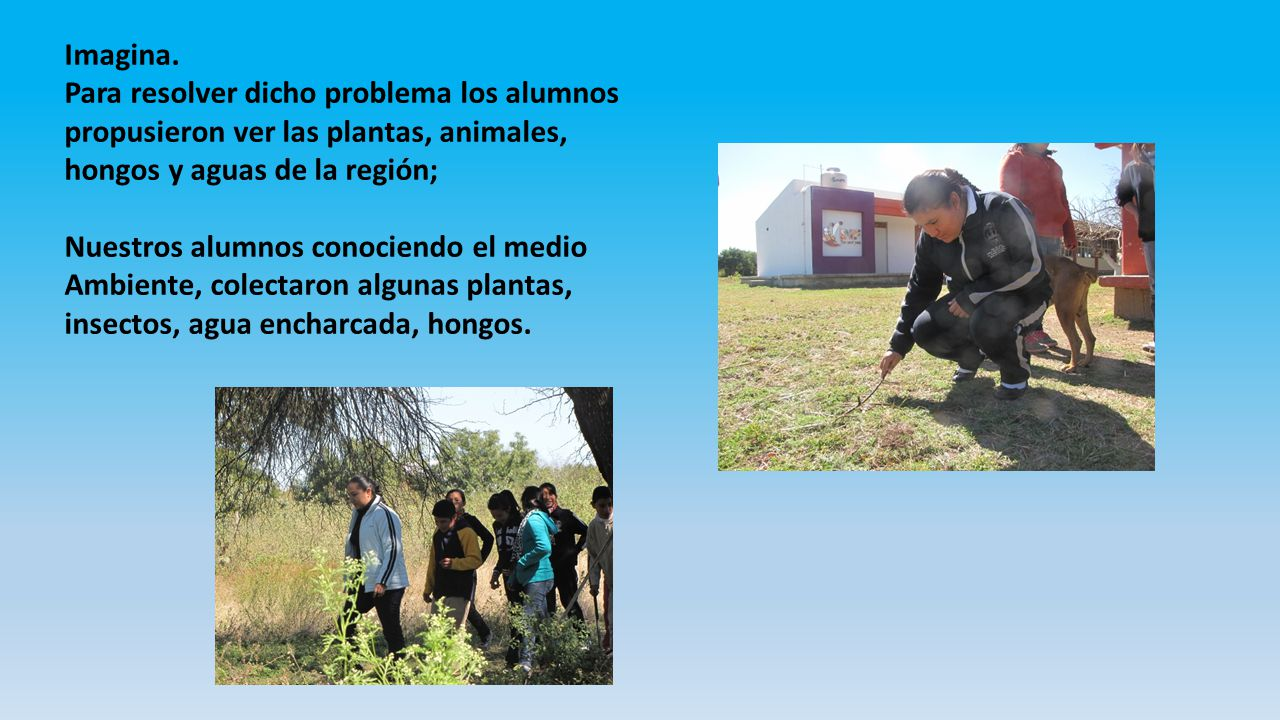 Imagina. Para resolver dicho problema los alumnos propusieron ver las plantas, animales, hongos y aguas de la región;
