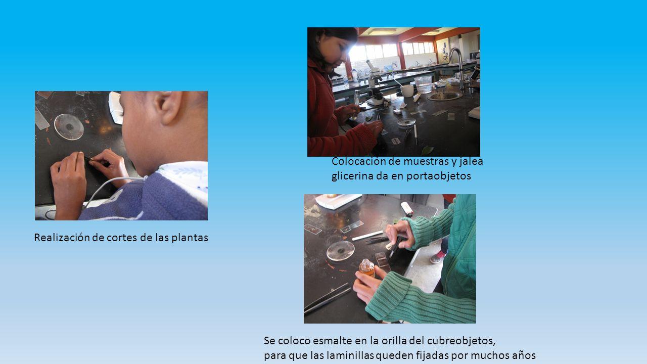 Colocación de muestras y jalea glicerina da en portaobjetos