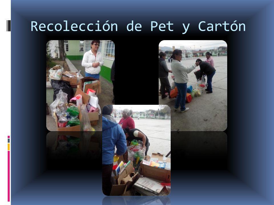 Recolección de Pet y Cartón