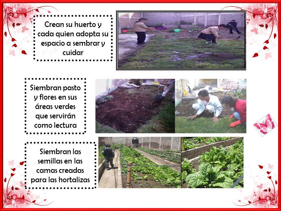 Crean su huerto y cada quien adopta su espacio a sembrar y cuidar