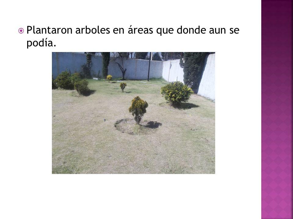 Plantaron arboles en áreas que donde aun se podía.