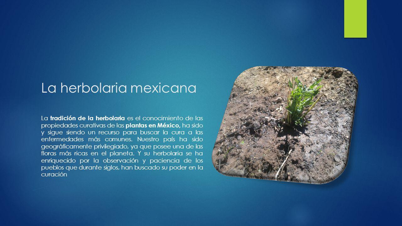 La herbolaria mexicana