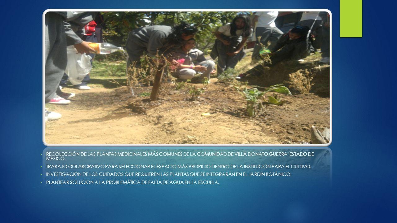 RECOLECCIÓN DE LAS PLANTAS MEDICINALES MÁS COMUNES DE LA COMUNIDAD DE VILLA DONATO GUERRA, ESTADO DE MÉXICO.