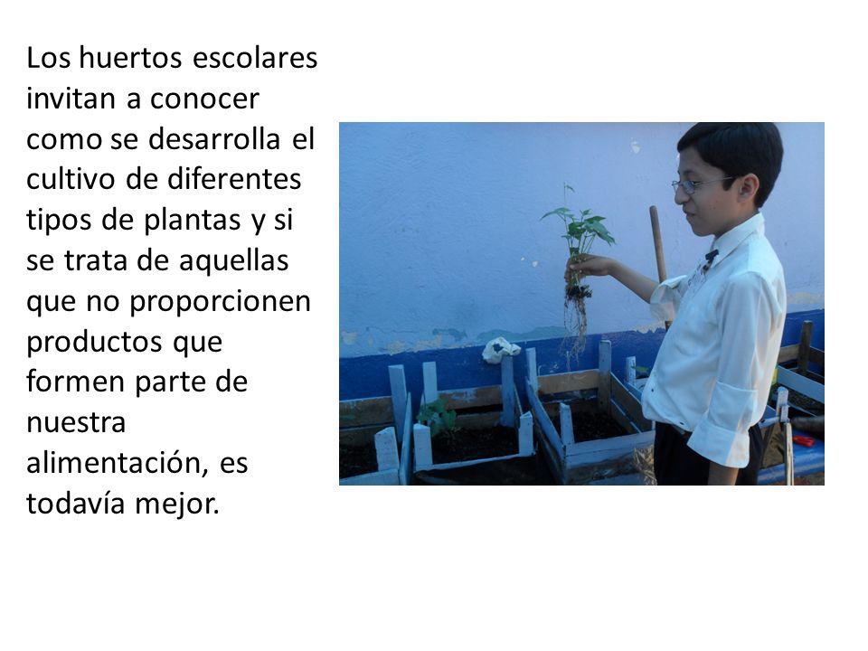 Los huertos escolares invitan a conocer como se desarrolla el cultivo de diferentes tipos de plantas y si se trata de aquellas que no proporcionen productos que formen parte de nuestra alimentación, es todavía mejor.