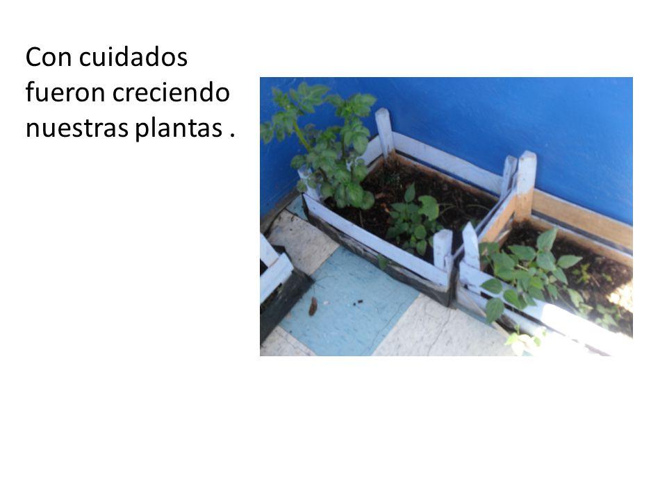 Con cuidados fueron creciendo nuestras plantas .
