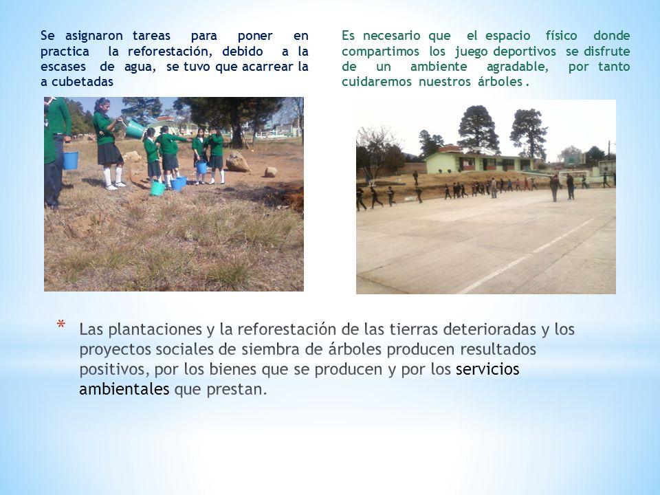 Se asignaron tareas para poner en practica la reforestación, debido a la escases de agua, se tuvo que acarrear la a cubetadas