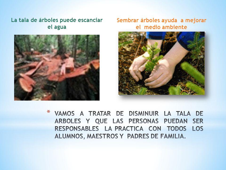 La tala de árboles puede escanciar el agua