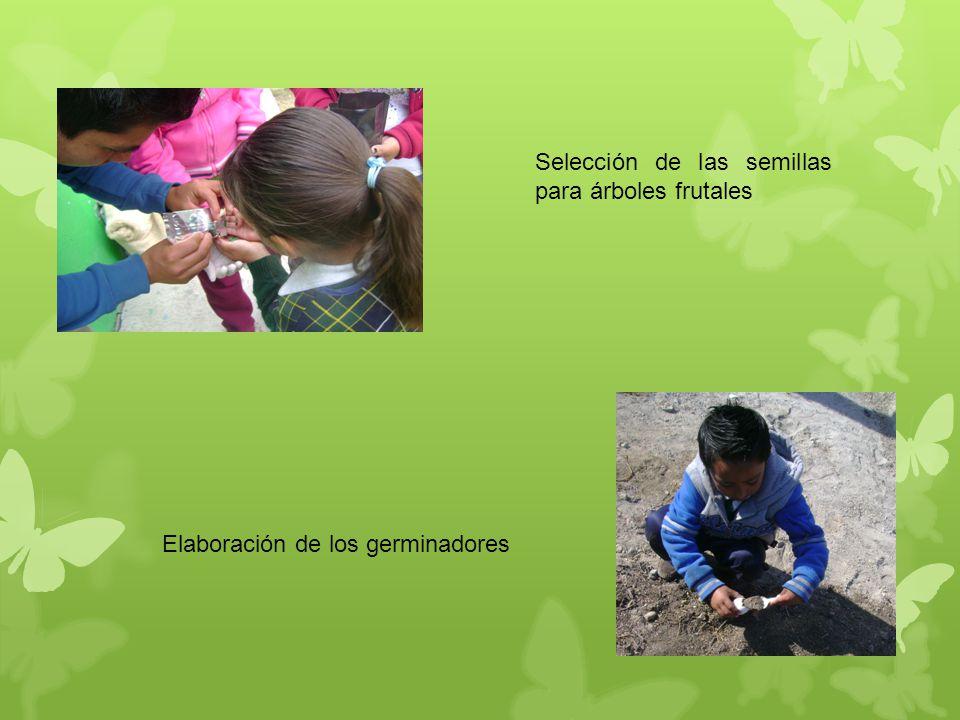 Selección de las semillas para árboles frutales