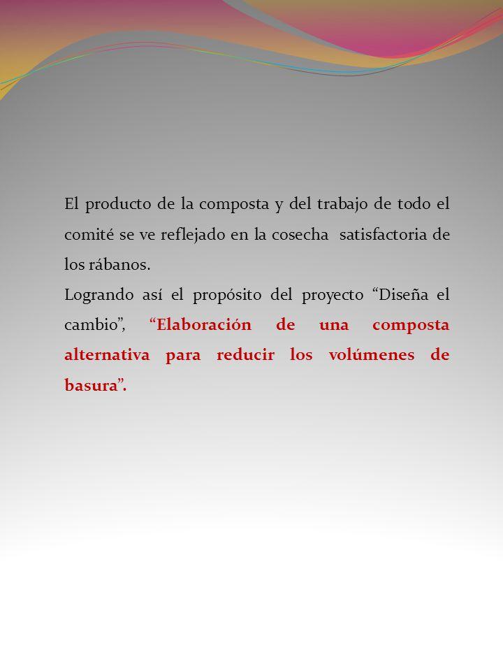 El producto de la composta y del trabajo de todo el comité se ve reflejado en la cosecha satisfactoria de los rábanos.