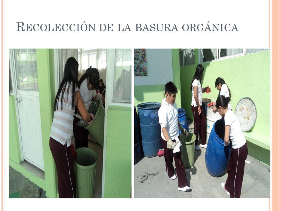 Recolección de la basura orgánica