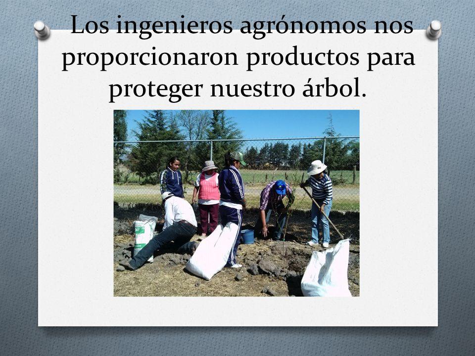 Los ingenieros agrónomos nos proporcionaron productos para proteger nuestro árbol.