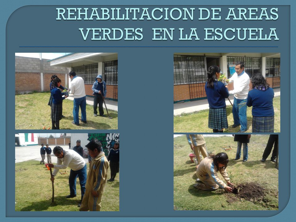 REHABILITACION DE AREAS VERDES EN LA ESCUELA
