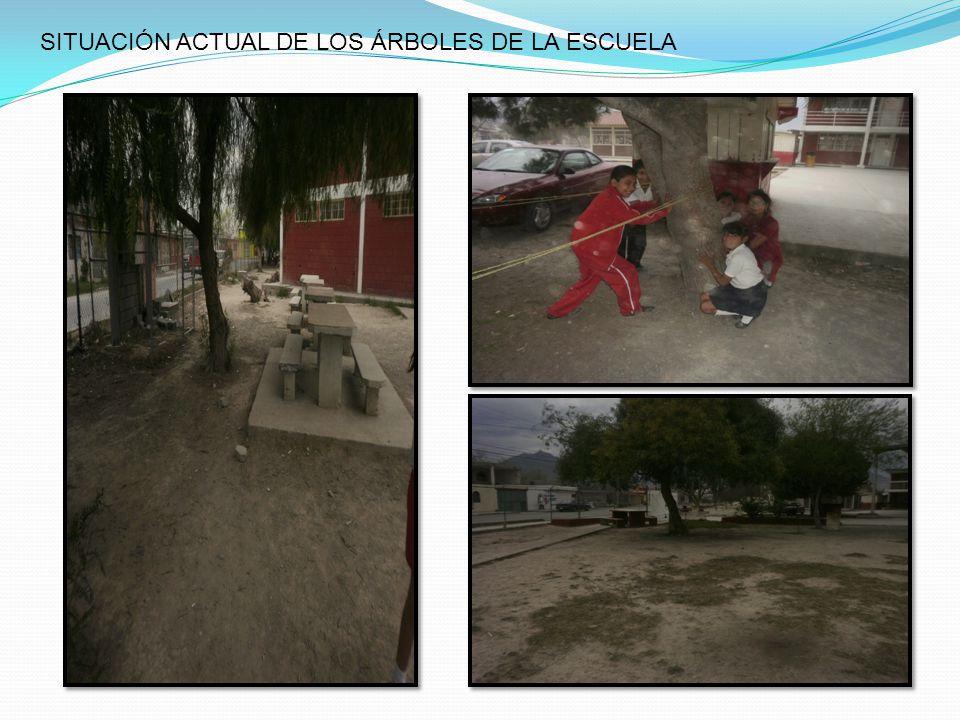 SITUACIÓN ACTUAL DE LOS ÁRBOLES DE LA ESCUELA