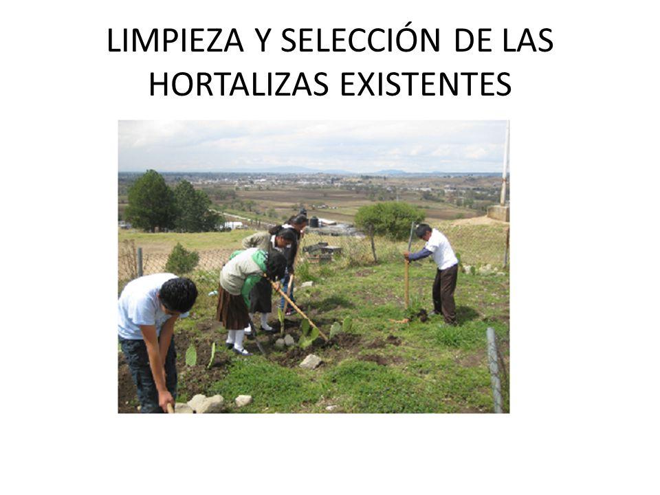 LIMPIEZA Y SELECCIÓN DE LAS HORTALIZAS EXISTENTES