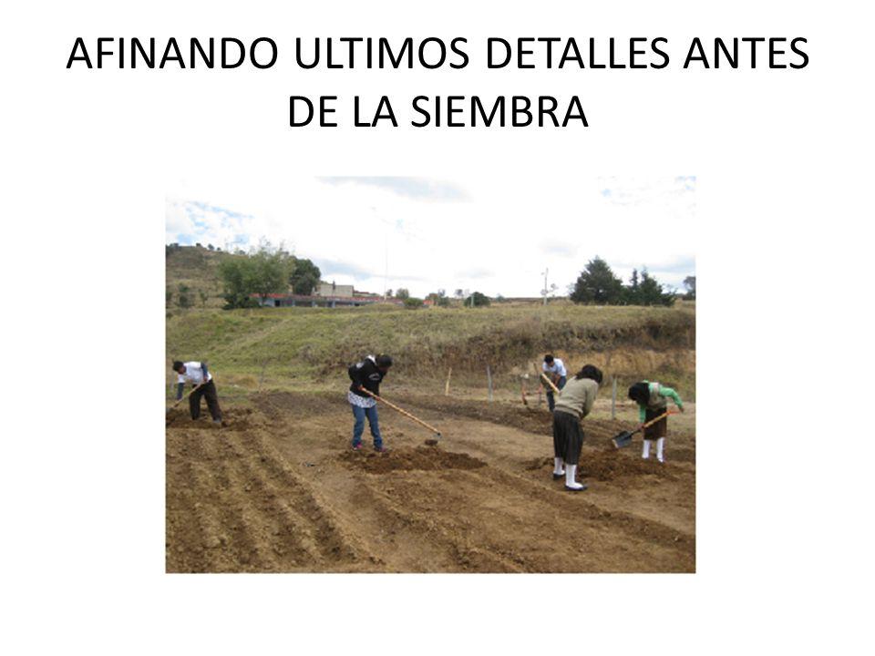 AFINANDO ULTIMOS DETALLES ANTES DE LA SIEMBRA