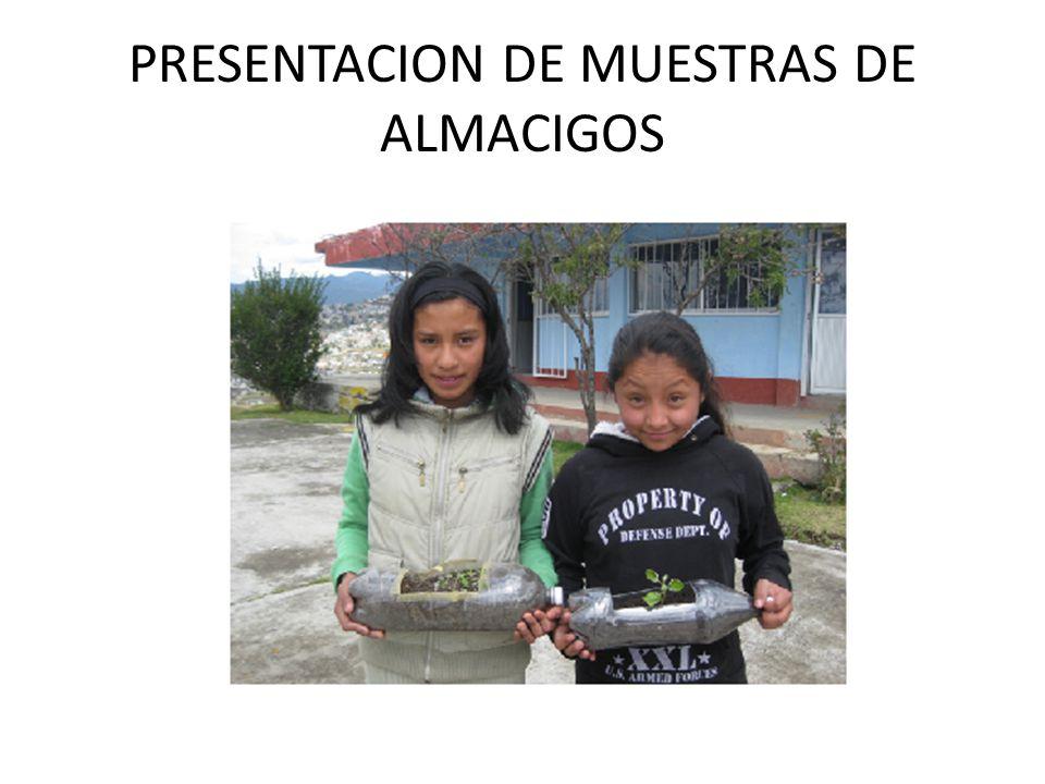 PRESENTACION DE MUESTRAS DE ALMACIGOS
