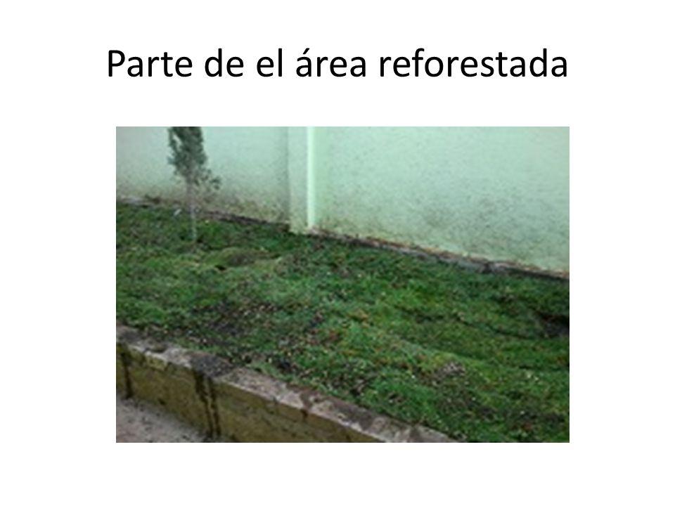 Parte de el área reforestada
