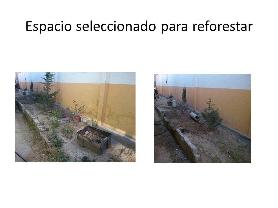 Espacio seleccionado para reforestar