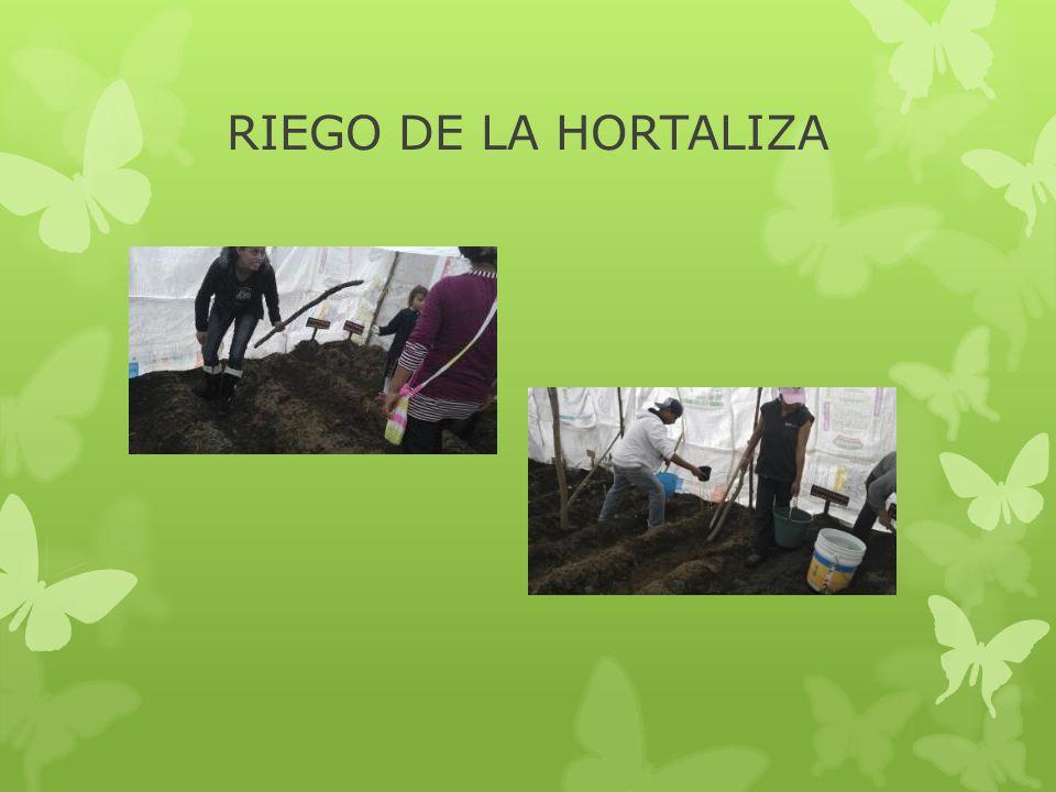 RIEGO DE LA HORTALIZA