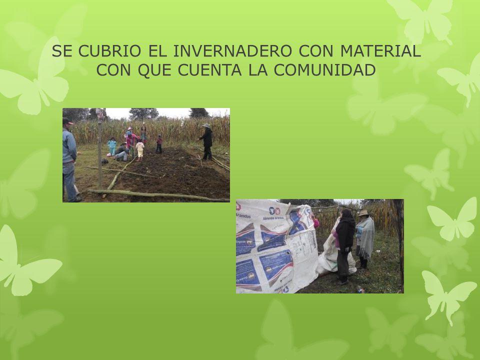 SE CUBRIO EL INVERNADERO CON MATERIAL CON QUE CUENTA LA COMUNIDAD