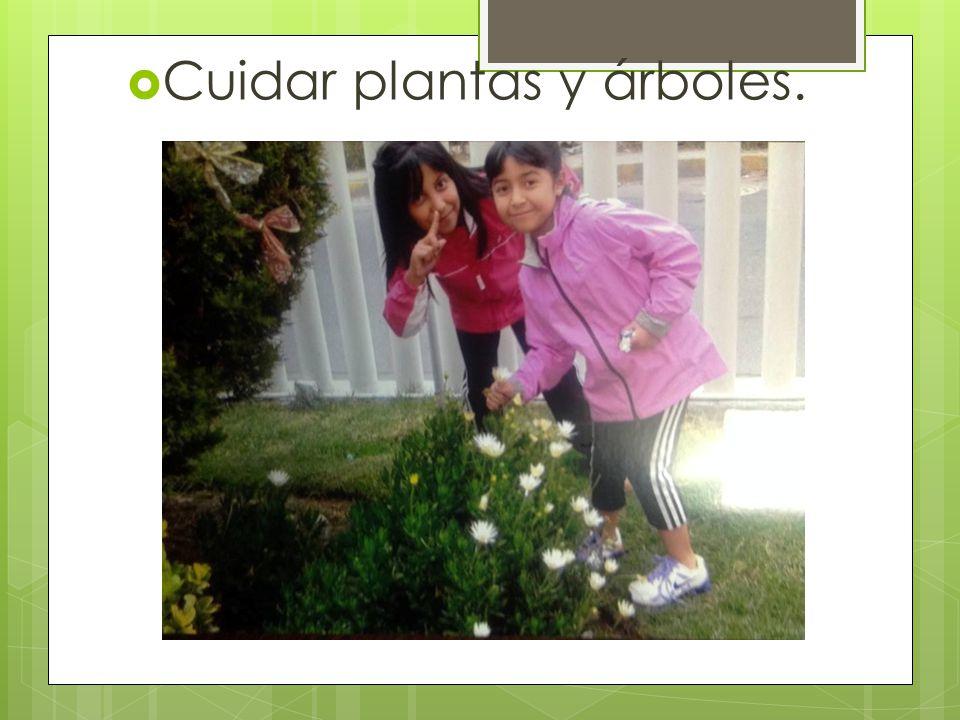 Cuidar plantas y árboles.