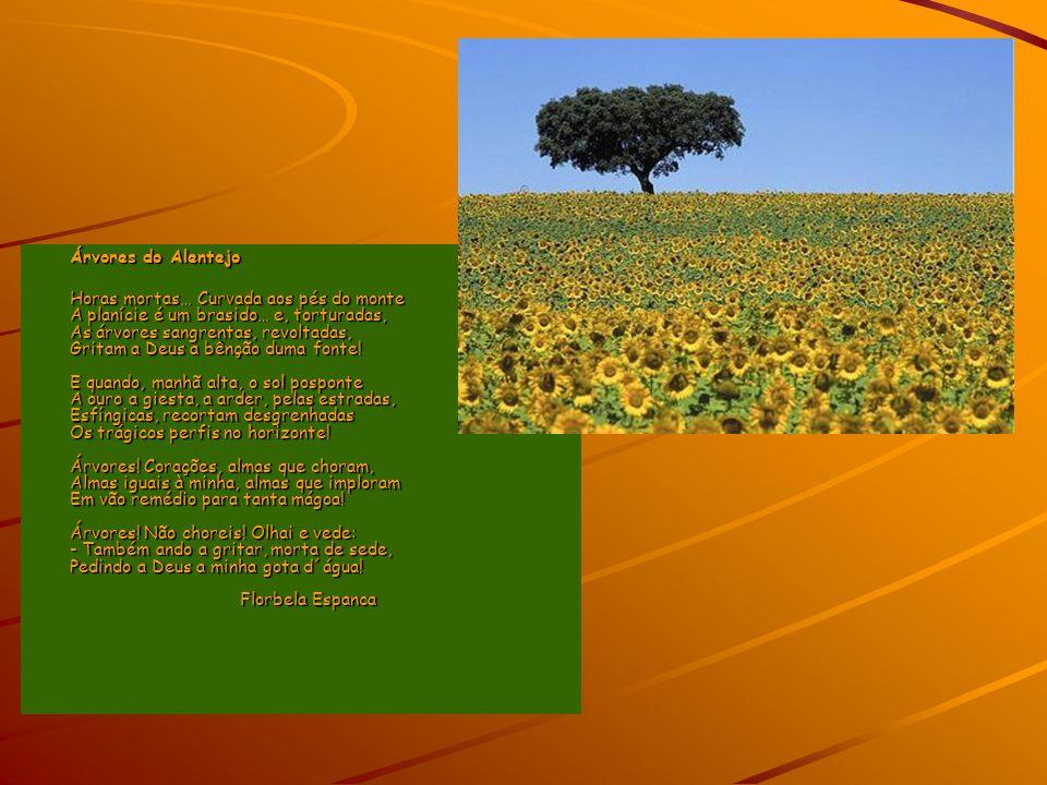 Árvores do Alentejo