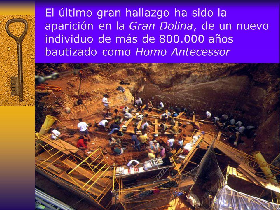 El último gran hallazgo ha sido la aparición en la Gran Dolina, de un nuevo individuo de más de 800.000 años bautizado como Homo Antecessor