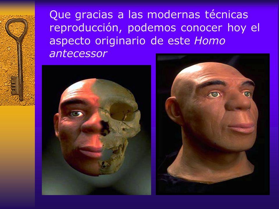 Que gracias a las modernas técnicas reproducción, podemos conocer hoy el aspecto originario de este Homo antecessor