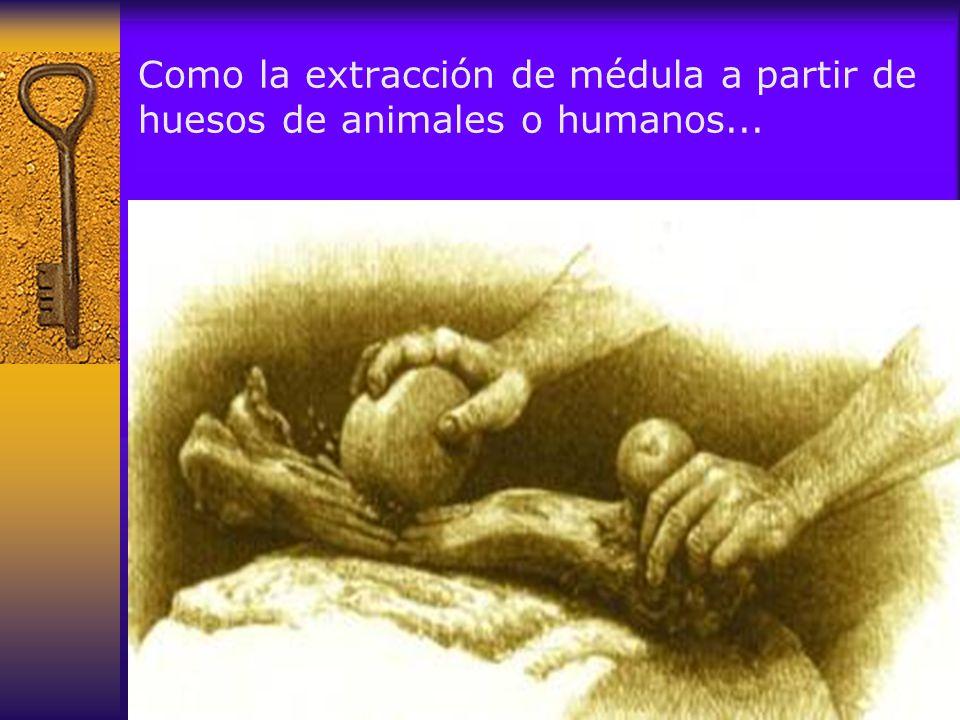 Como la extracción de médula a partir de huesos de animales o humanos...
