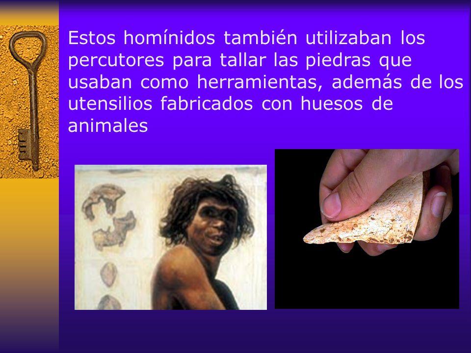 Estos homínidos también utilizaban los percutores para tallar las piedras que usaban como herramientas, además de los utensilios fabricados con huesos de animales