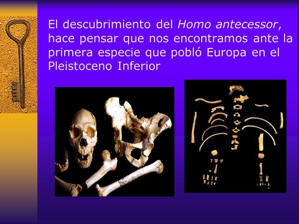 El descubrimiento del Homo antecessor, hace pensar que nos encontramos ante la primera especie que pobló Europa en el Pleistoceno Inferior