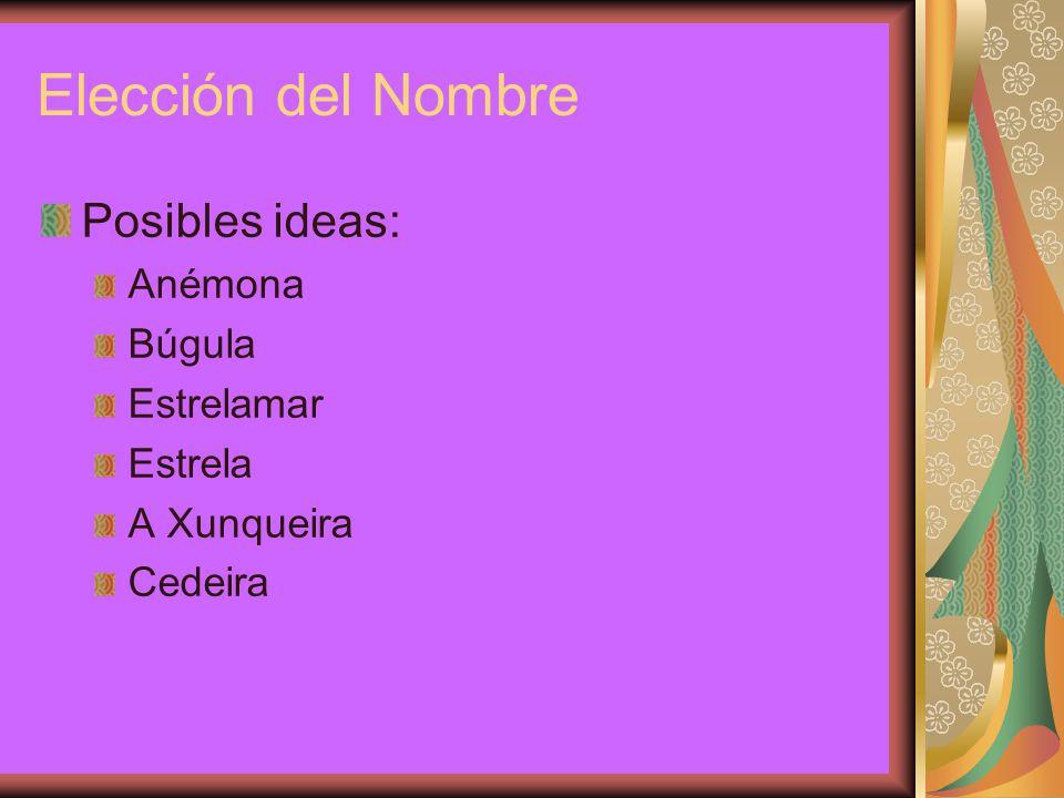 Elección del Nombre Posibles ideas: Anémona Búgula Estrelamar Estrela