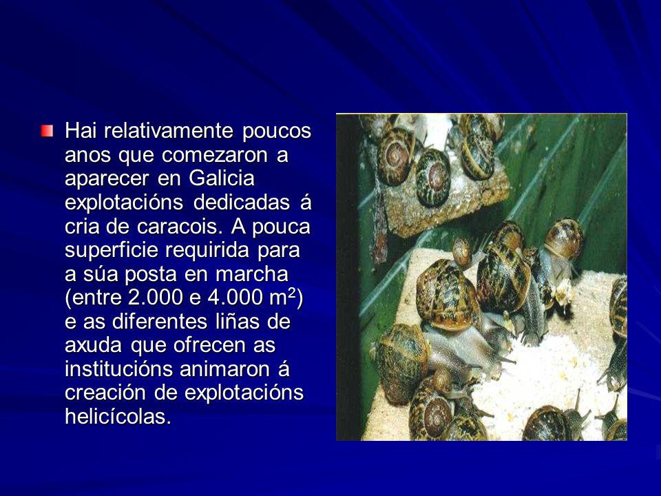Hai relativamente poucos anos que comezaron a aparecer en Galicia explotacións dedicadas á cria de caracois.